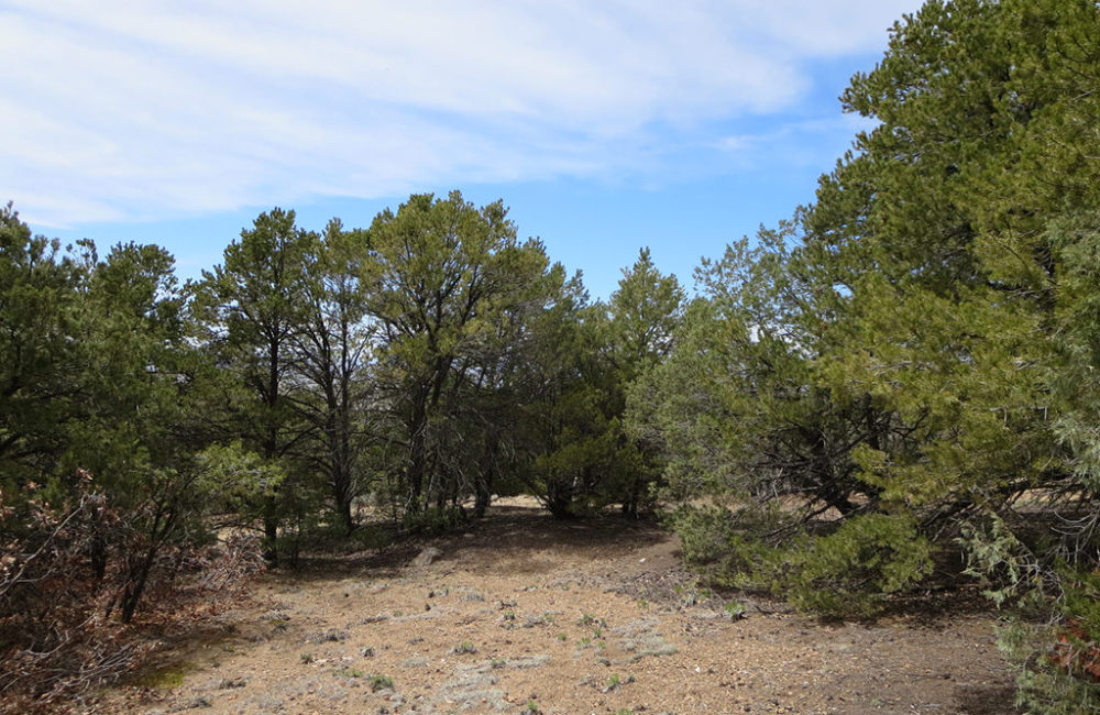 Tract G Calle Coyote, Taos NM 87571